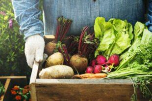 Die Wissenschaft und die Vorteile des Konsums lokaler saisonaler Produkte